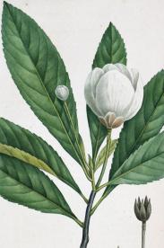 A117: Art and antiques - books, old prints, manuscripts