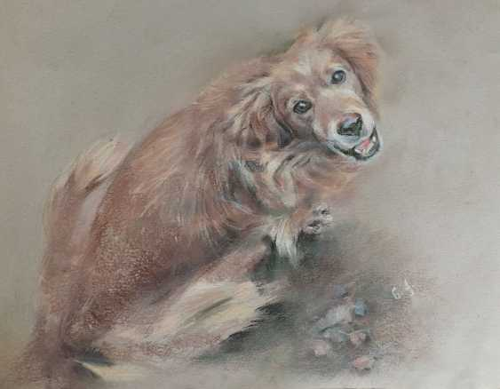 Natalia Qaliashvili. Funny dog - photo 1