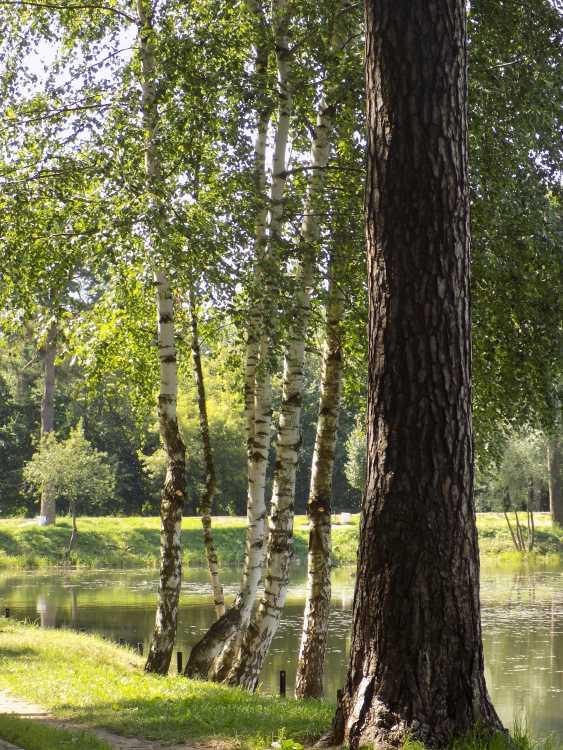 Leonid Sorokin. landscape photography - photo 4