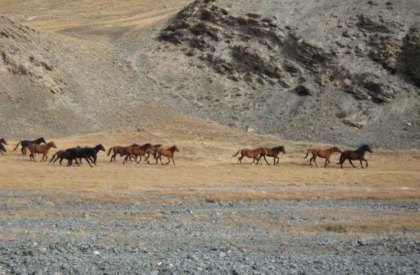 Vadim Gordeev. Horses - photo 1