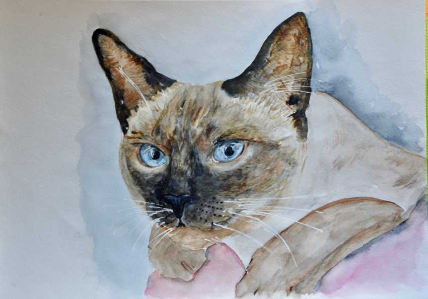 Maryna Pashchenko. The Siamese. - photo 1