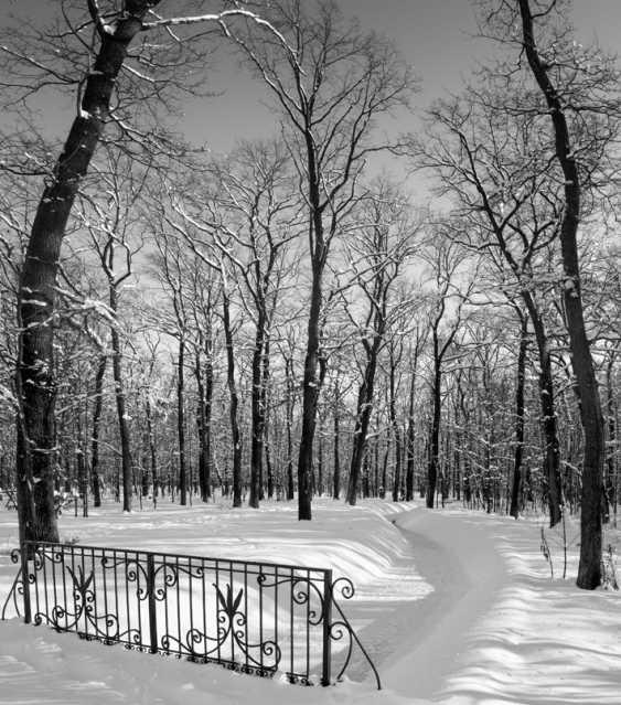 "Vasyl Garnyk. ""Im Park"" - photo 1"
