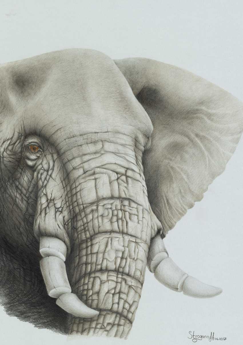 Sergey Stroganoff. African elephant - photo 1
