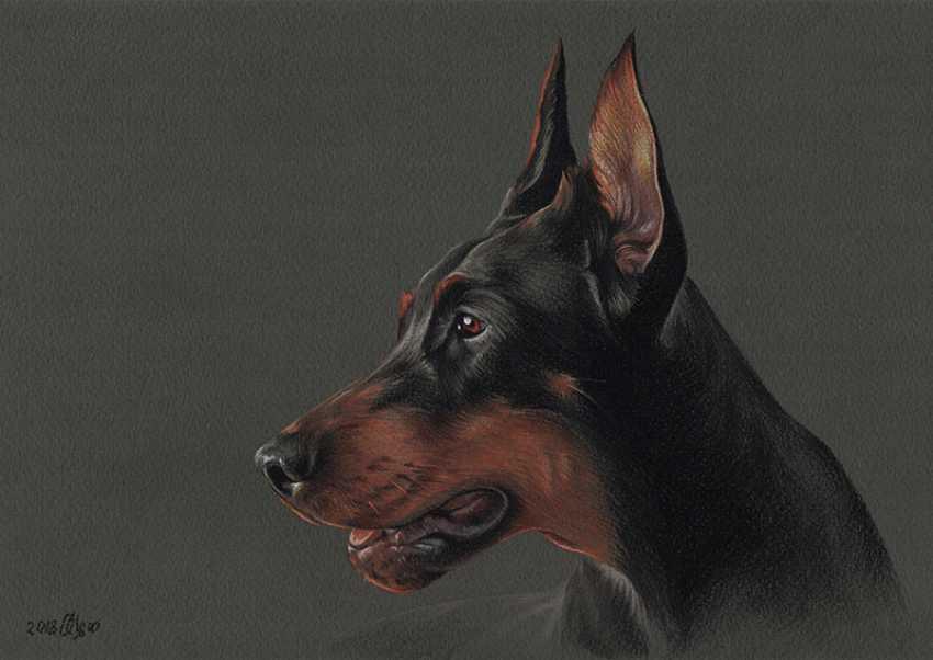Olga Tsvetkova. Pastel portrait of dobermann - photo 1