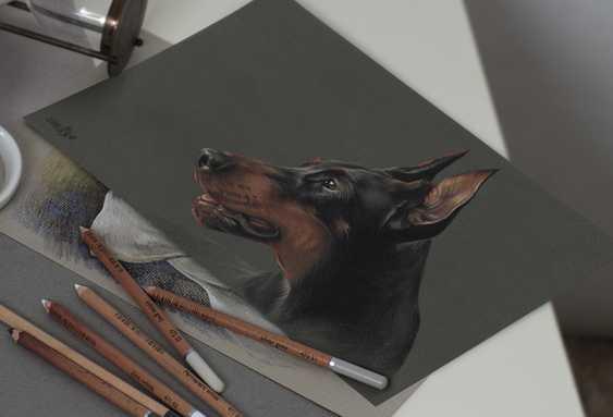 Olga Tsvetkova. Pastel portrait of dobermann - photo 2