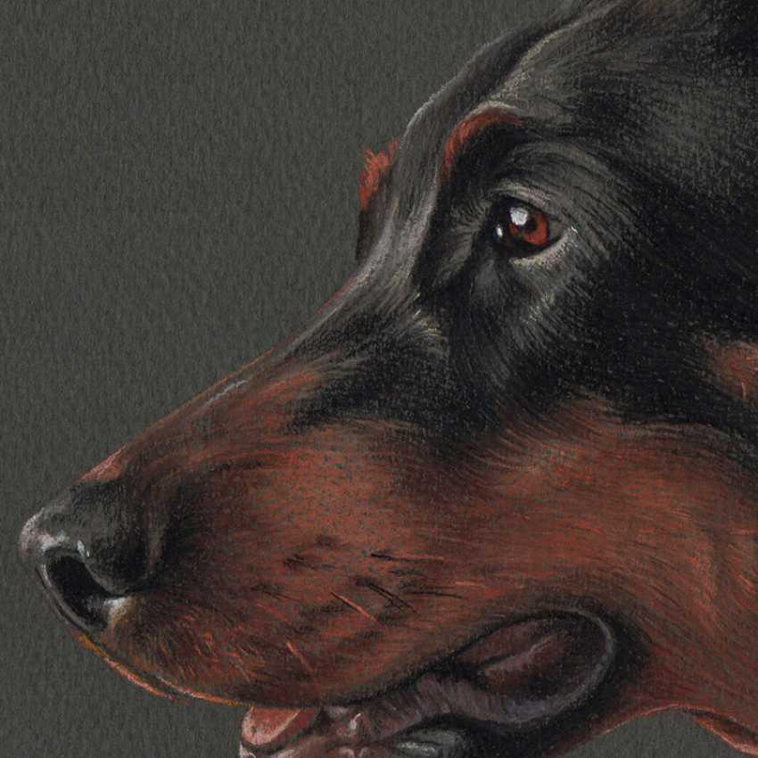 Olga Tsvetkova. Pastel portrait of dobermann - photo 3