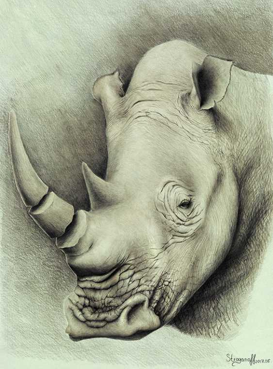 Sergey Stroganoff. White rhino - photo 1