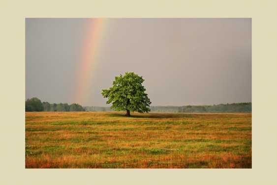 "Vladimir Buturlia. ""Rainbow"" - photo 1"