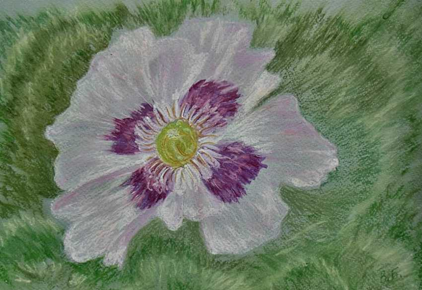 Victoria Buchina. Pink poppy - photo 1
