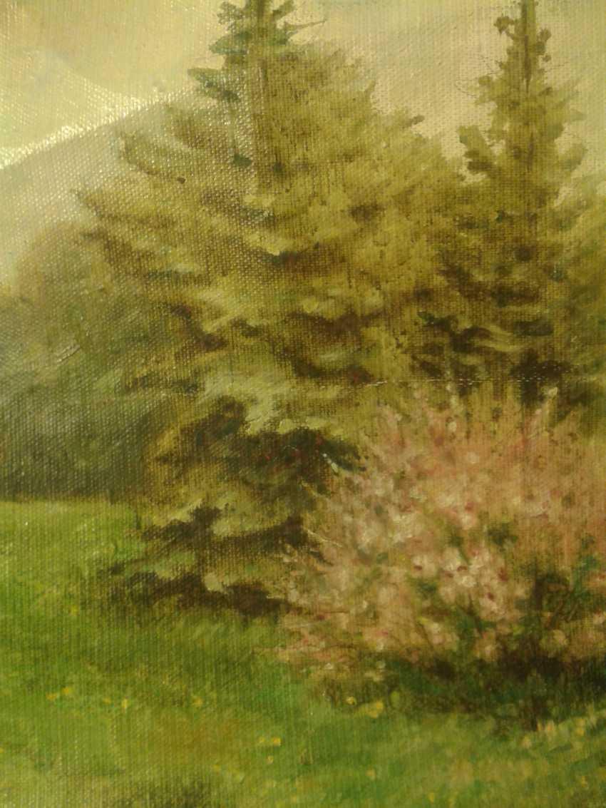 Andrei Kosharnii. Ботанический сад в Киеве. Цветение китайского миндаля на фоне голубых елей - Foto 1