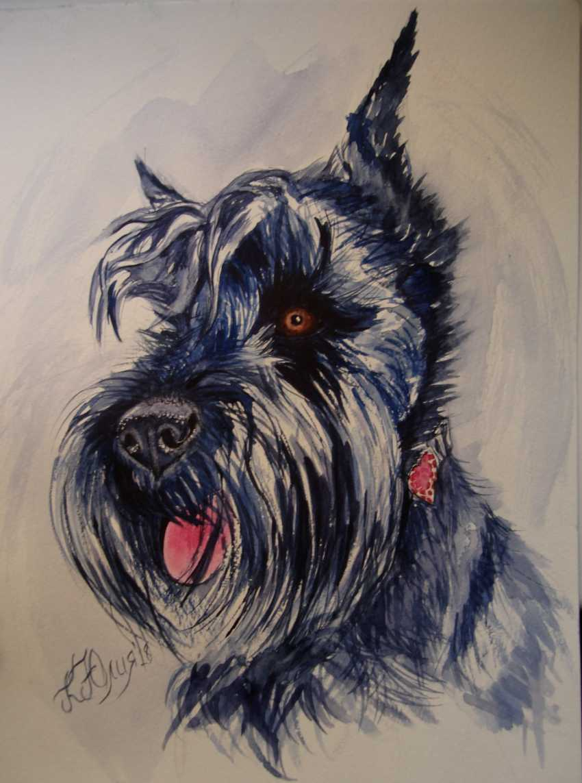 Julia Koliada. Schnauzer - photo 1