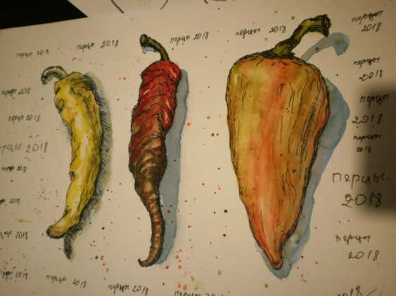 "Tatyana Kazimir. The sketch ""peppers"" - photo 1"