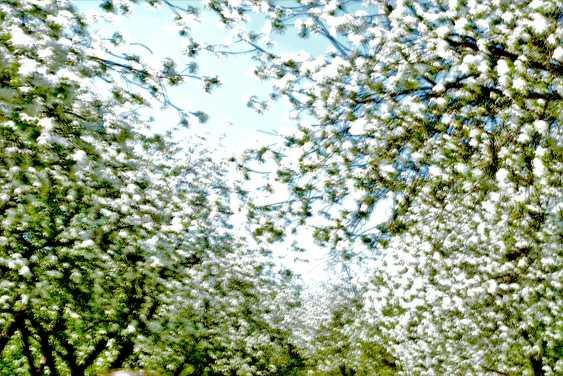 Medea Paatashvili. Where the spring dreams lead. You can create a springtime dream - photo 1