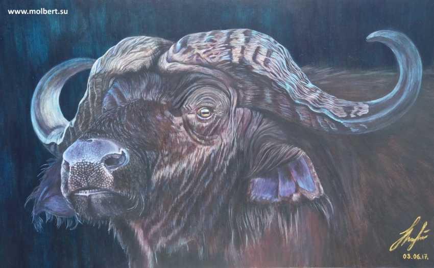 Olena Lytvynenko. Buffalo. Buffalo. - photo 1