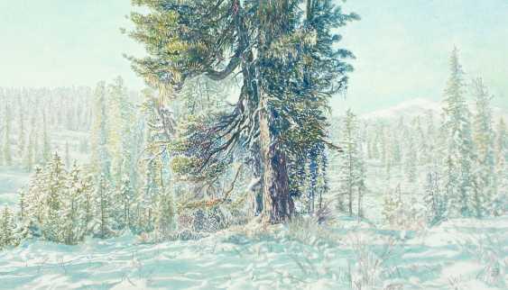 Viktor Borodin. Cedar - photo 1