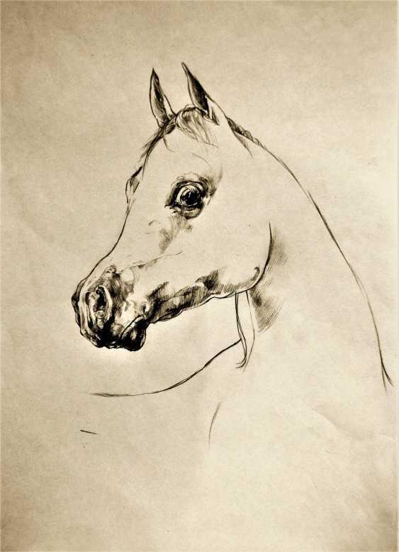 Nicolay Marinov. horse head - photo 1