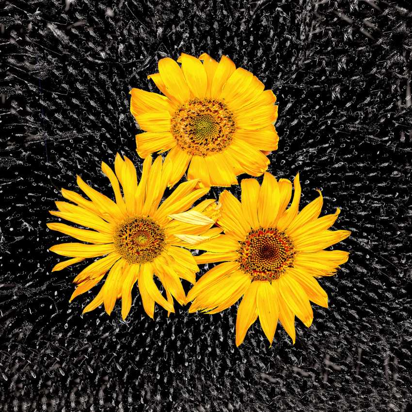 """Andrey Petrosyan. From the series """"Sunflowers"""" - photo 1"""