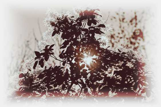 Andrey Petrosyan. Autumn Sun - photo 1