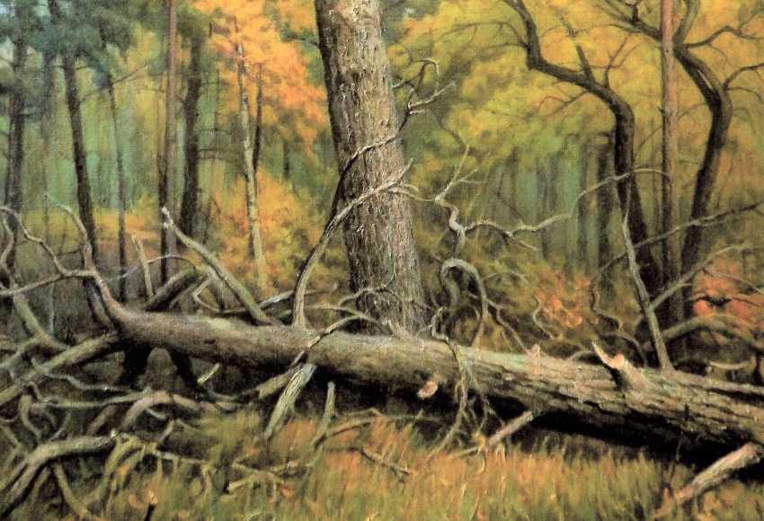Alexander Kusenko. Mixed forest. Pine - photo 3