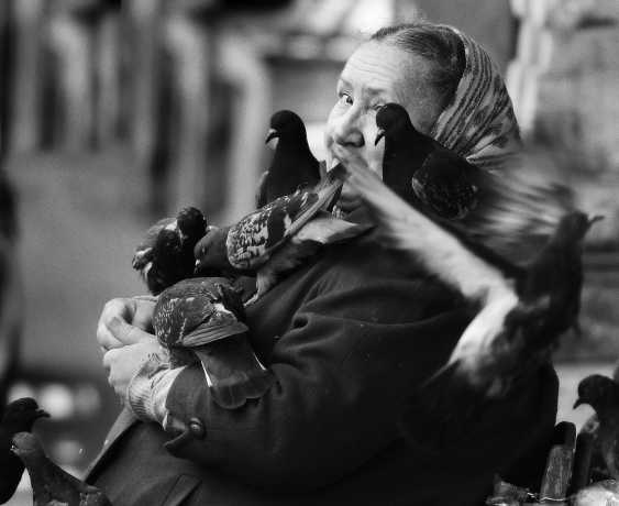 Andrey Petrosyan. The Love and pigeons - photo 1