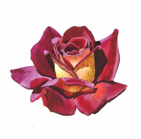 Maryna Lysiana. The rose in full bloom - photo 1