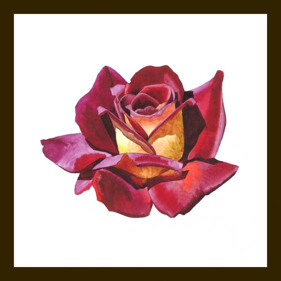 Maryna Lysiana. The rose in full bloom - photo 2