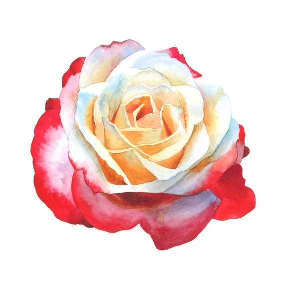 Maryna Lysiana. Blooming rose - photo 1