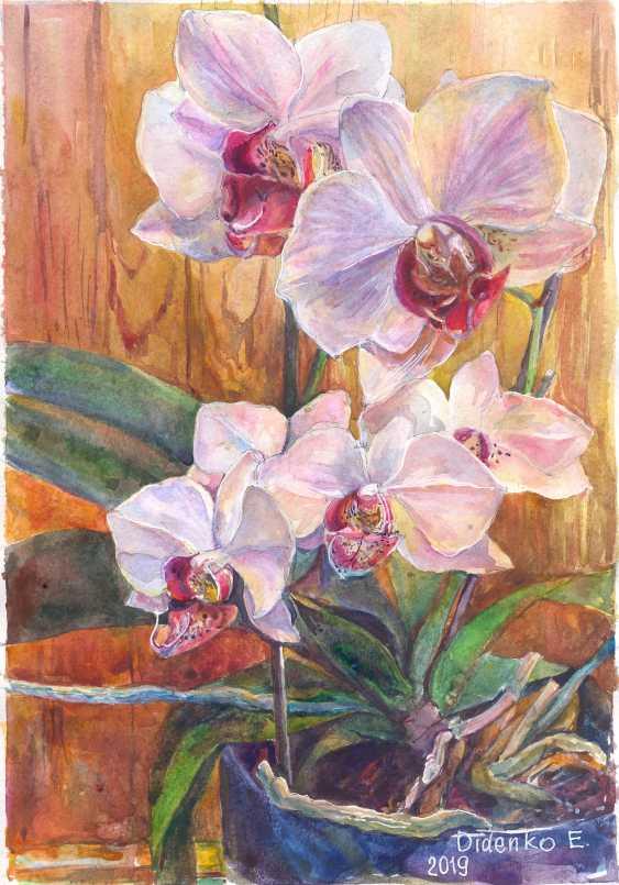 Elena Didenko. Orhidei. - photo 1
