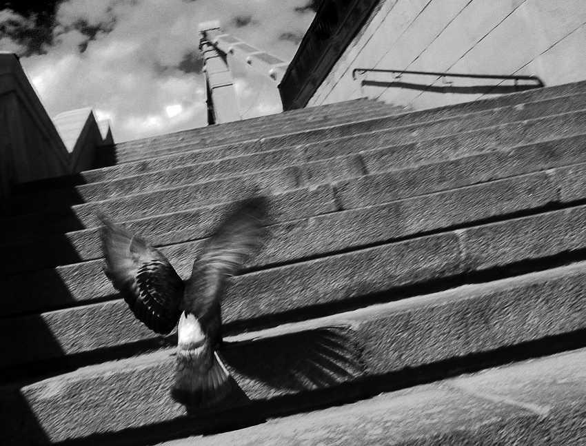 Andrey Petrosyan. step - photo 1