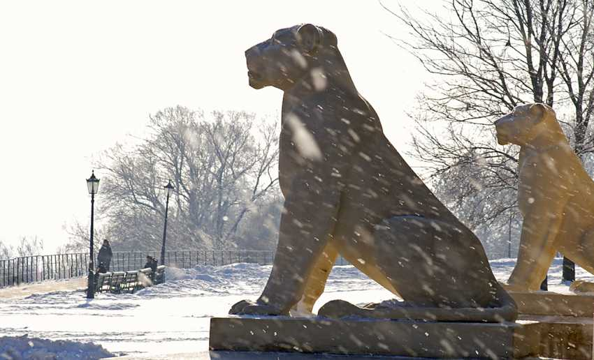 Andrey Petrosyan. Winter Lions - photo 1