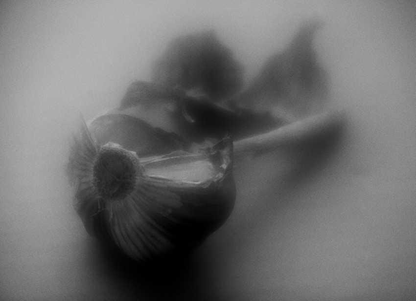 Andrey Petrosyan. Still life with garlic - photo 1