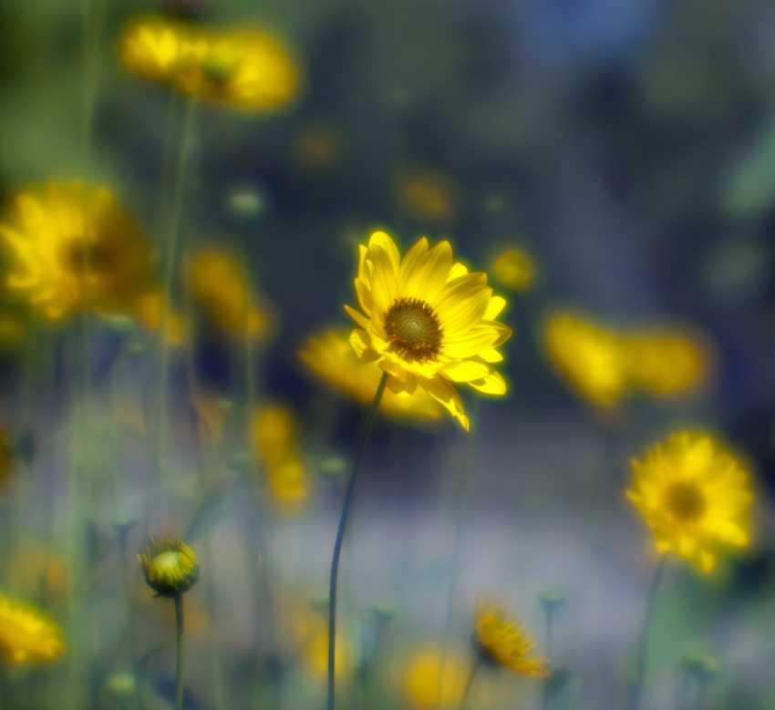 Andrey Petrosyan. Summer meadow - photo 1