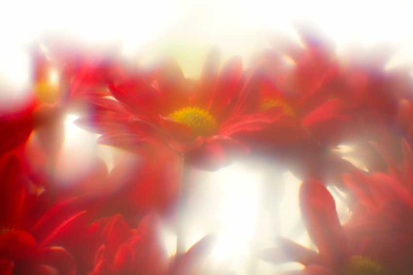 Andrey Petrosyan. Solar flowers - photo 1