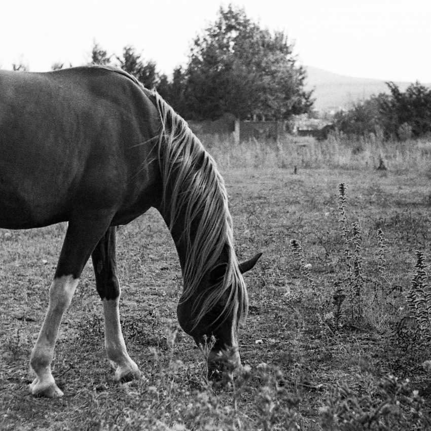 "Adam Kypriadis. ""Horsing around"", Shot on film - photo 1"