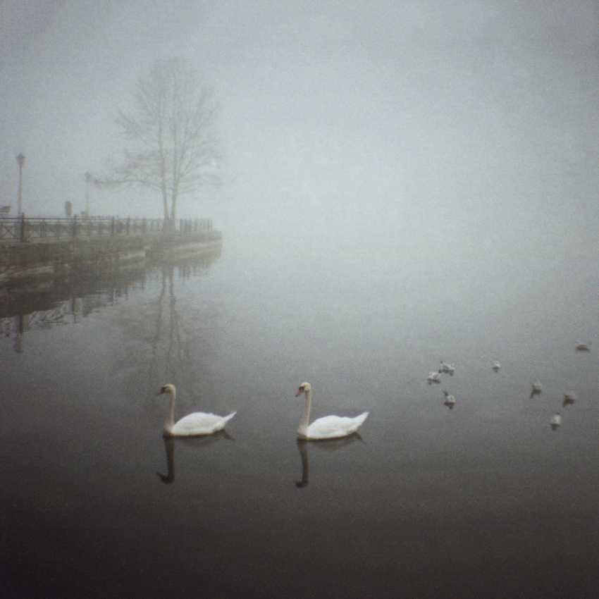 "Adam Kypriadis. ""Swan family in a foggy morning"", Shot on film - photo 1"