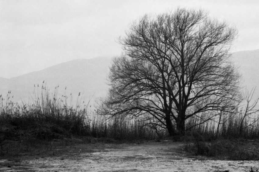 "Adam Kypriadis. ""Winter"", Shot on film - photo 1"