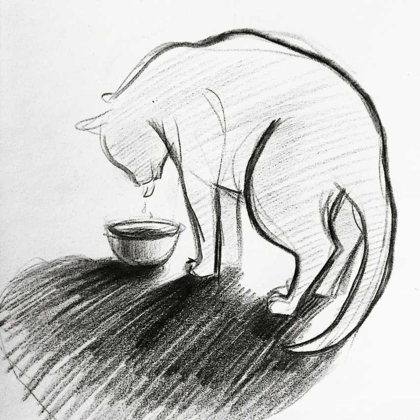Darya Efremova. Just a cat that came to drink water - photo 1