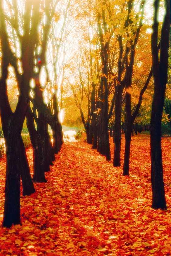 Andrey Petrosyan. Autumn alley - photo 1
