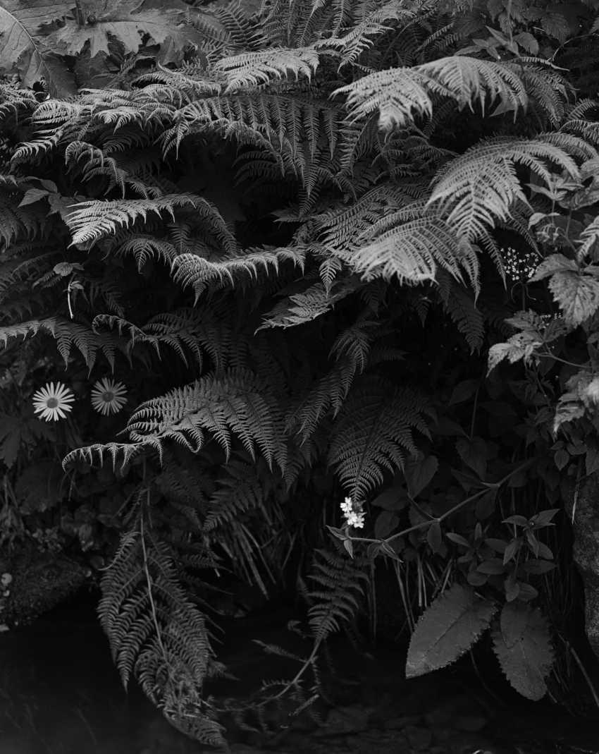 Andriy Kotliarchuk. The fern above water - photo 1