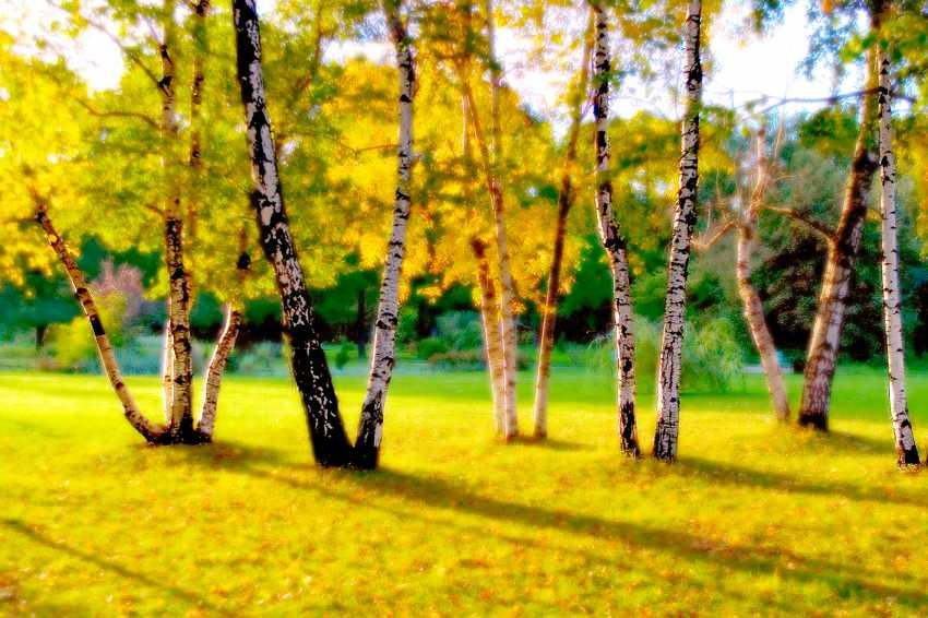 Andrey Petrosyan. Golden grove - photo 1