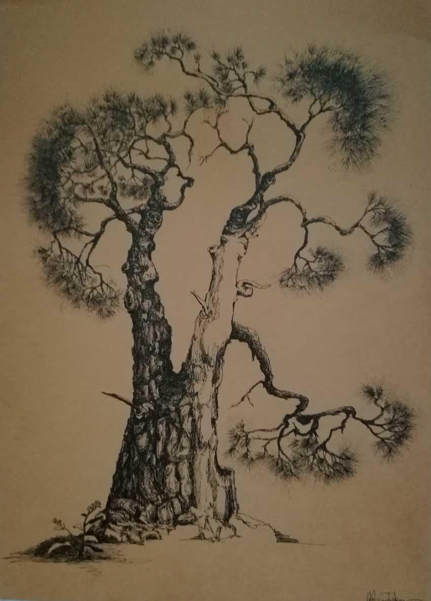 Ekaterina Marakhovskaya. Calabrian pine - photo 1