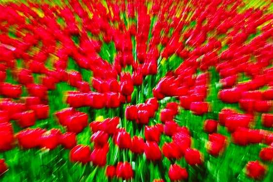 Andrey Petrosyan. Floral explosion - photo 1