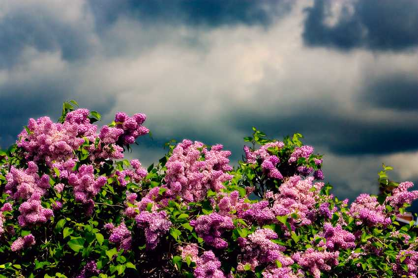 Andrey Petrosyan. The spring storm - photo 1