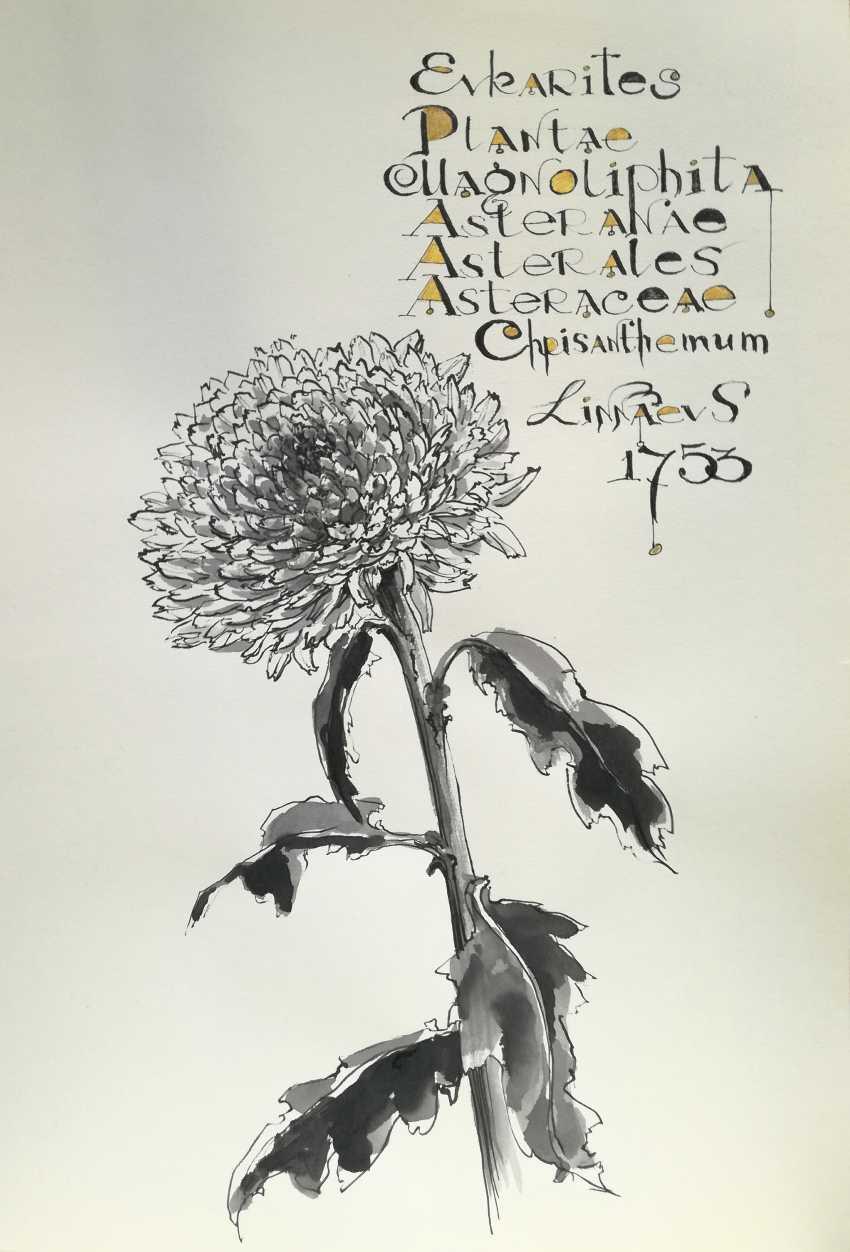 Ekaterina Marakhovskaya. Chrysanthemum - photo 1