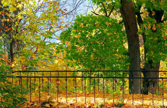 Andrey Petrosyan. Bridge in autumn - photo 1