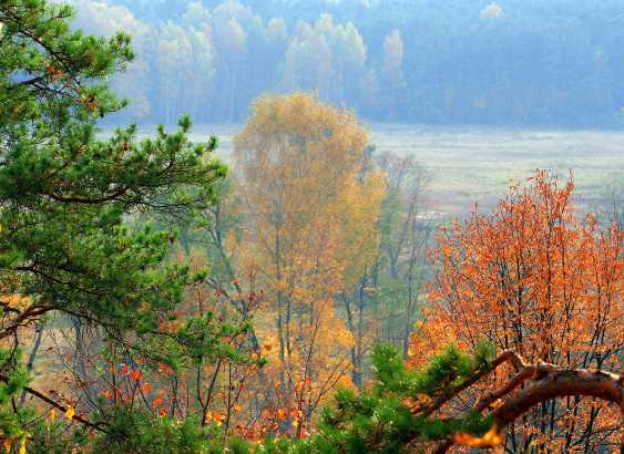 Andrey Petrosyan. Herbstmorgen - Foto 1