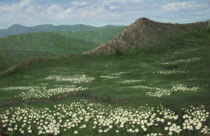 Lidiya Ivanova. Mountains. Summer, chamomile meadow - photo 1