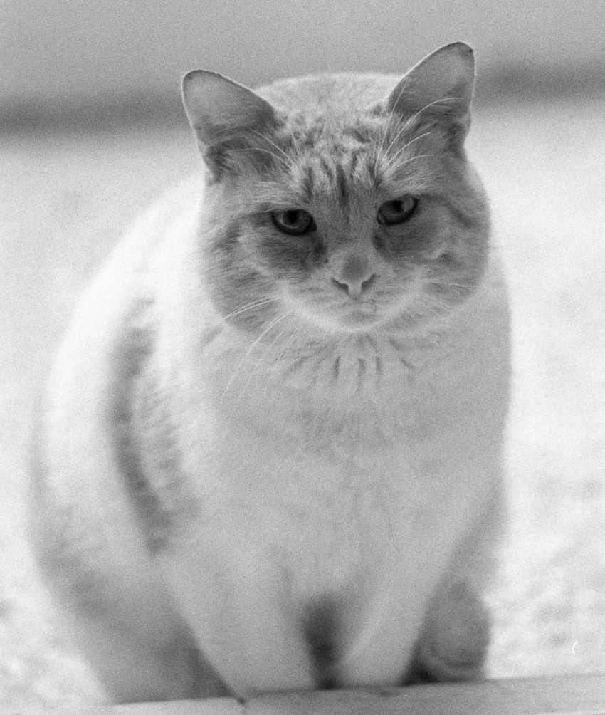 "Adam Kypriadis. ""Miau"", fotografiert auf Film - Foto 1"