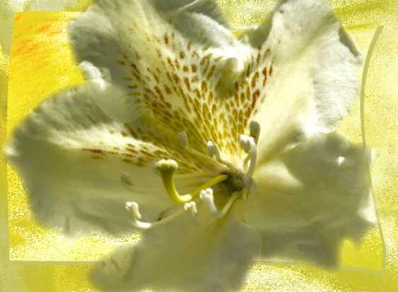 Alexander Zhurakovskiy. Rhododendron - photo 1