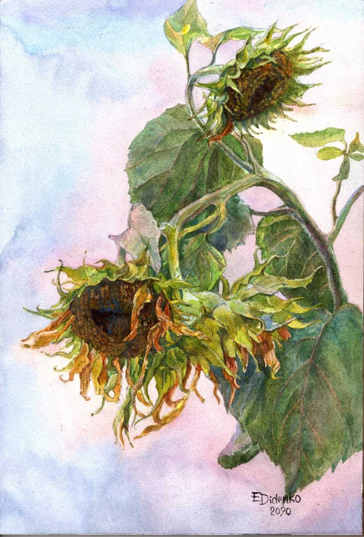 Elena Didenko. Sunflower - photo 1